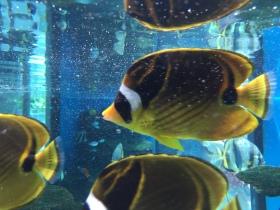 200 Nakagawa Aquarium