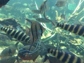 270 Nakagawa Aquarium